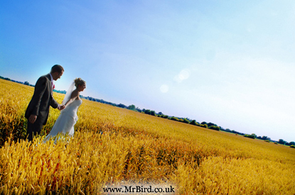 bride and groom in a bright yellow corn field
